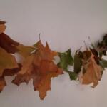Herbst, Blätter, Äpfel, Krippe